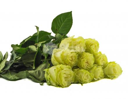 Высокая белая роза поштучно